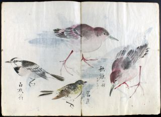 The Various Birds: Fifty-six Varieties. The Color of the Bird, Shape of the Body.