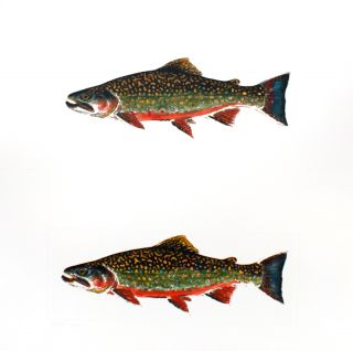 Trout & Bass.