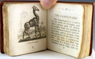 Natural History of 48 Quadrupeds, With Elegant Engravings, from Drawings by Alfred Mills.
