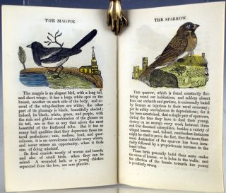Uncle Buncle's Painted Exhibition. A Natural History of Beasts and Birds.