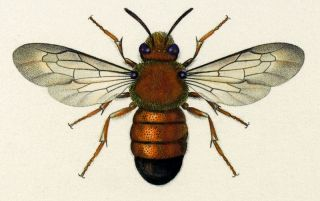 Hymenoptera, Twelve Specimens. Vance Studley, Tom Mossman